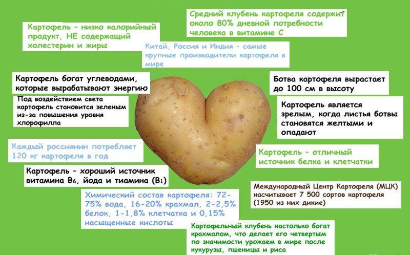 Геморрой народные средства лечения сырым картофелем