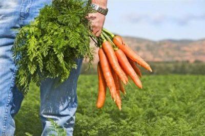Геморрой пройдёт без крови ботву моркови