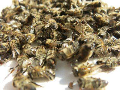 Пчелиный подмор от простатита: как приготовить и принимать
