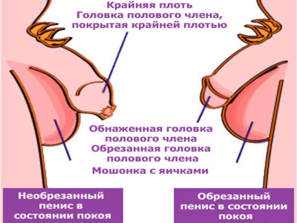 Урологии у детей обрезания